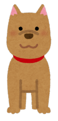 animal_dog_front.png